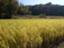 id:inafield_farm