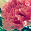 id:inflorescencia