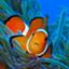 id:island-web