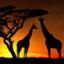 itsuka-Africa