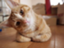 id:itsumoitsudemo