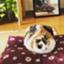 jadd_cat463