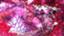 id:jenoderk0117