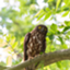 id:john_birdswatch