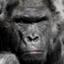id:kabushiki-gorilla