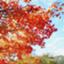 kaede_no_blog