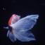 kaito_fujinuma