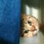 id:kamihiro0923