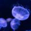 kamome-ni-notte