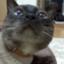 id:kanchan91516768