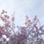 id:kasa_kurage