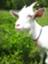 id:kaz-mt-wisteria