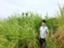 id:kazumiwa
