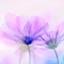 id:kei561208