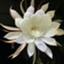 id:keiko-blog