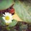 keiko_flower