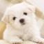 id:ken_tokyo