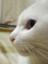 ki_ryu