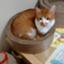kikumaru_dd