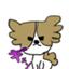 kinaco_grape