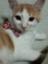 id:kirahime-haruka531