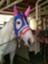 id:kitagawa-stable