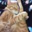 kitty2245