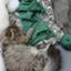 knitting_aya