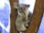 koala1984