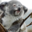 koalablog