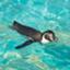 id:kohei327