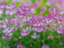 id:kokoroyawaragurengesou