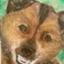 id:koromama
