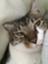 id:kota_uni