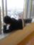 id:kotakotaking
