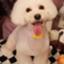 id:kotaro-dog