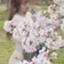id:kotosawa_a