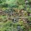 id:kousukefinfin