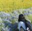 kukka_suzu
