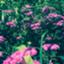 id:kumakuma_iruka
