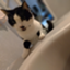 id:kumori-tokidoki-cat