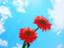 id:kuro_1021