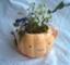 id:kuruppo