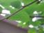 id:kuwanomi-mayu