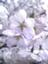 id:kyora_az