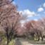 id:kyotravel