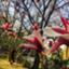 id:kyui_aoto