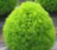 kyujitsu