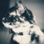 id:kzni_d