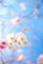 id:lapislazuli1203253